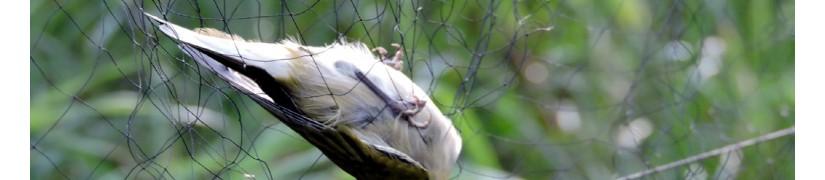 Filets japonais de maille 20 mm pour le baguage des oiseaux